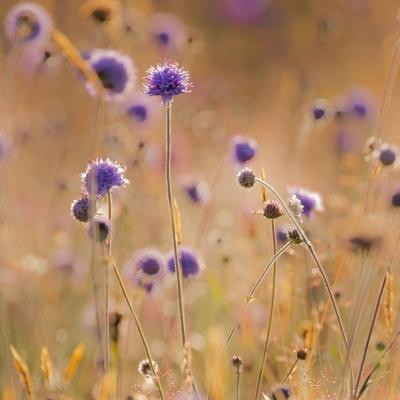 Wildlife & Flora