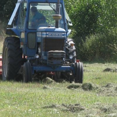 Strewing Green Hay